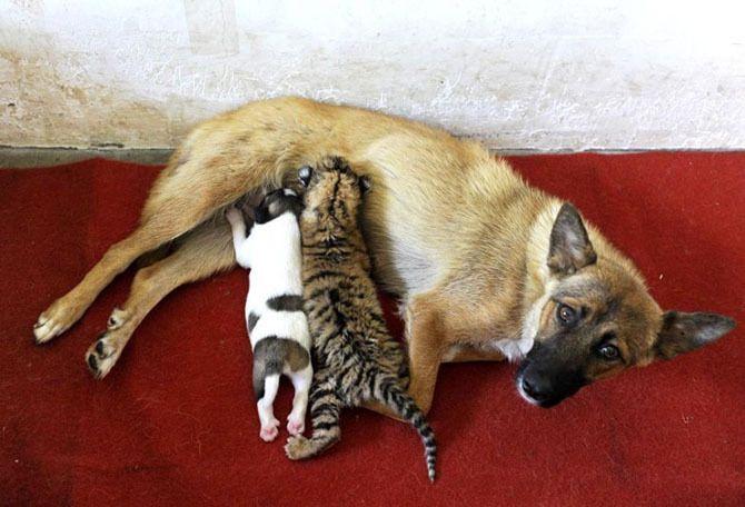 Вот такие приемные дети у мамочки с добрым сердцем