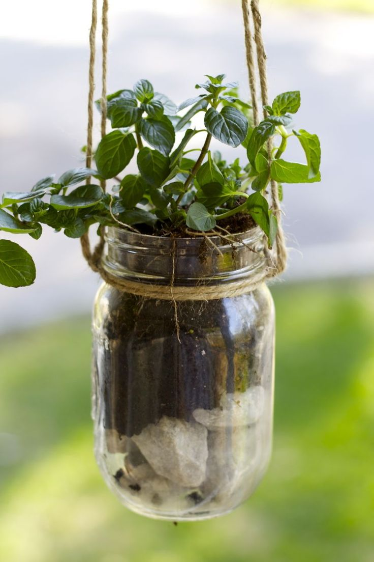 Best 25+ Mason jar herbs ideas on Pinterest | Mason jar plants ...