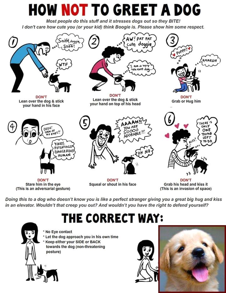 1 Have Dog Behavior Problems Learn About Dog Behavior On