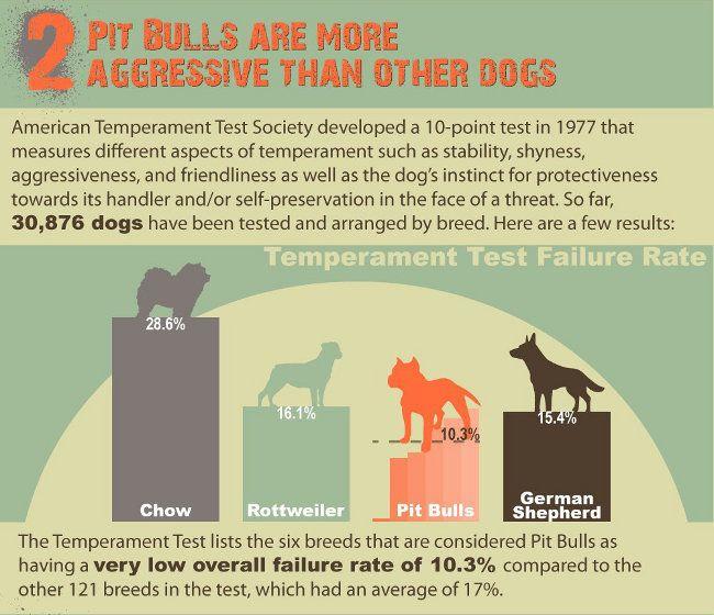 Are Pit Bulls Dangerous? Shattering 5 Pit Bull Myths