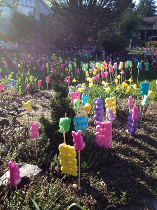Great idea for decorating w peeps.  Or, do this as a joke to your neighbor!  I have to remember to do this next year.