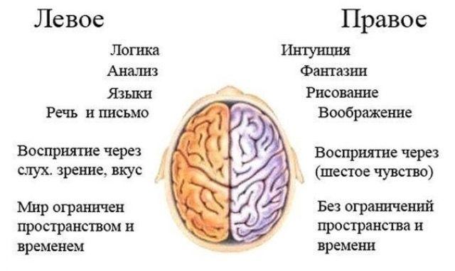САМОЕ ИНТЕРЕСНОЕ В ИНТЕРНЕТЕ: За что отвечают левое и правое полушария мозга