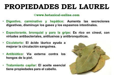 Propiedades del laurel medicinal and aromatic plants - Vitaminas para plantas de interior ...