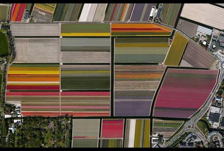 Las 10 mejores tomas de Google Earth - Grupo Milenio Los campos de tulipanes en Holanda. (Benjamin Grant)