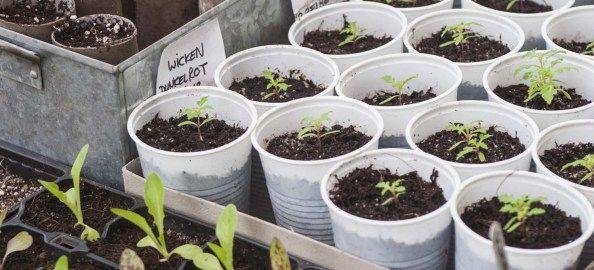 gemüse wie auberginen, paprika und tomaten jetzt säen