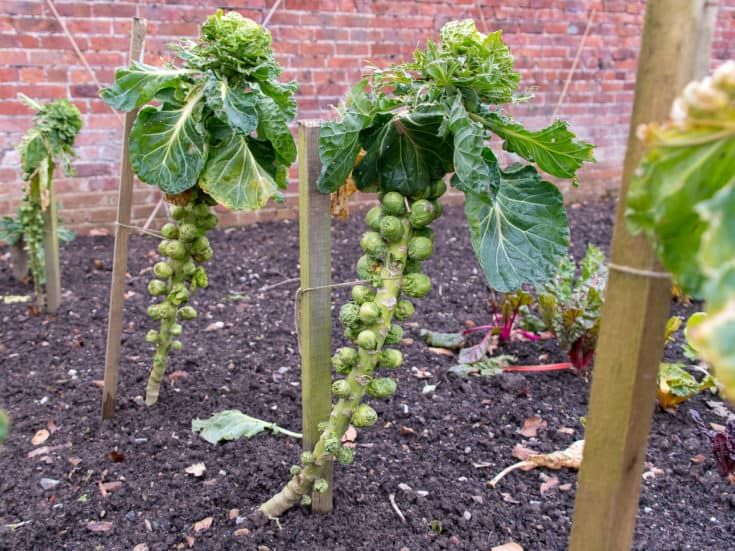 20 Incompatible Combative Plants That Could Ruin Your Garden Bean Garden Cucumber Companion Plants Companion Planting
