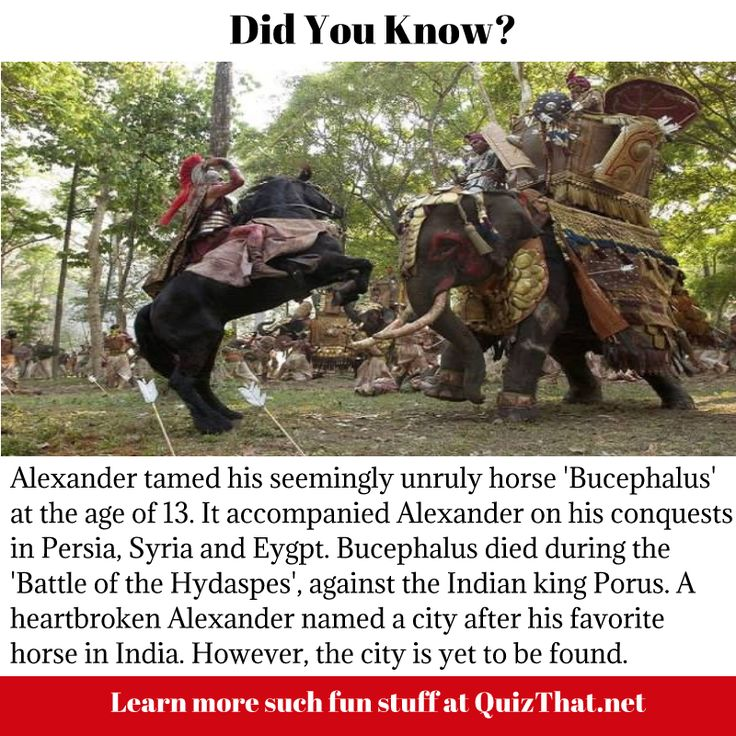 "Alexander tamed his horse ""Bucephalus"" at the age of 13"