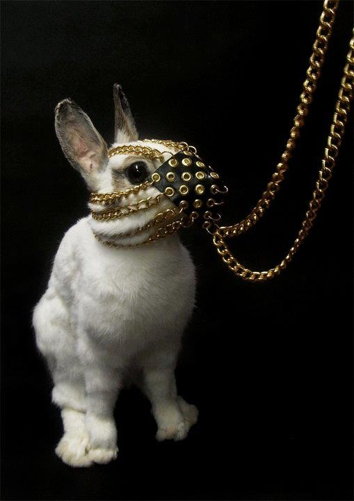 Bunny. Think Monty Python's Holy Grail & the Knight attacking bunny!