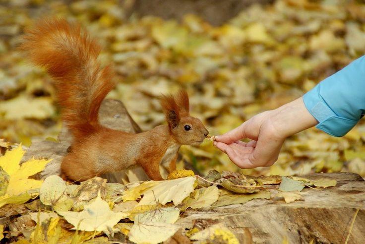 Brauchen Eichhörnchen Diätpläne für eine Woche? Nur, wenn es um den Winterschlaf geht...