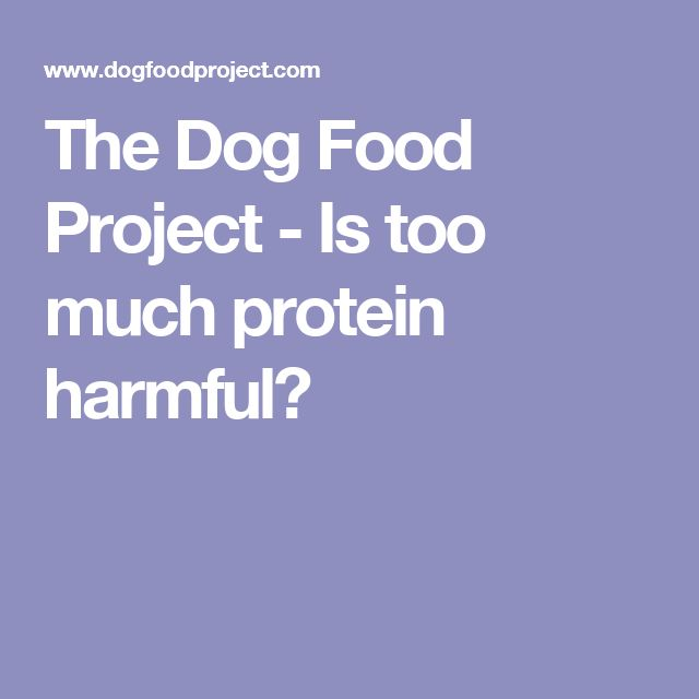 The Dog Food Project - Is too much protein harmful?