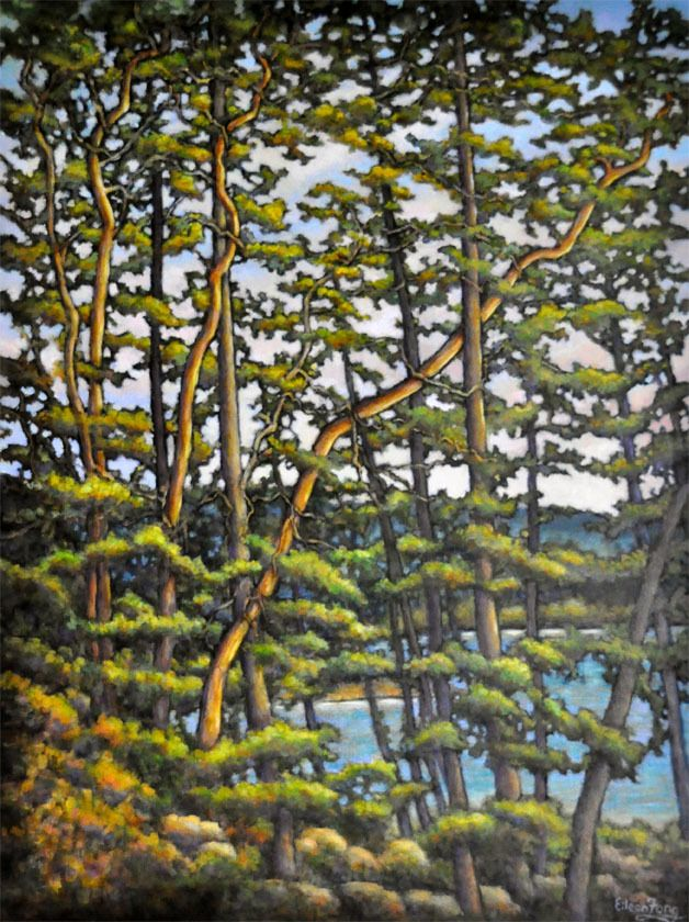 """The Golden Touch by Eileen Fong, Arbutus Trees, 48"""" x 36"""""""