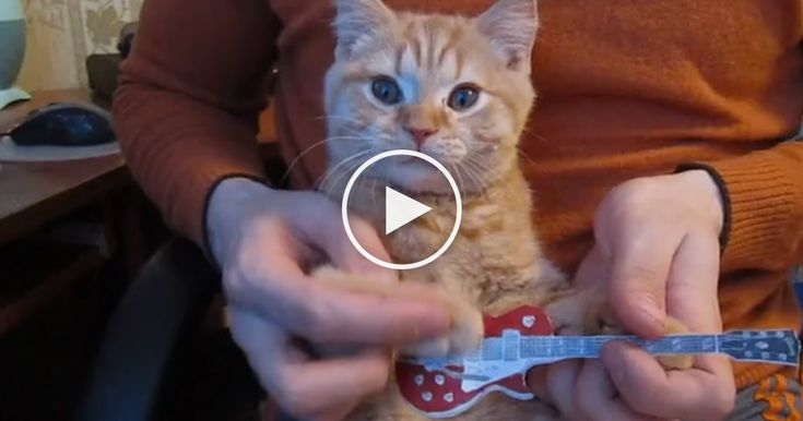 """This kitty and her owner love to play songs together in the cutest way ever. The music was originally plyed by Israel Kamakawiwo'ole""""Over The Rainbow.""""  Watch this fine feline guitar player play along to a happy tune of """"Over The Rainbow""""  It's only 10 seconds long, but is set on repeat, so yo"""