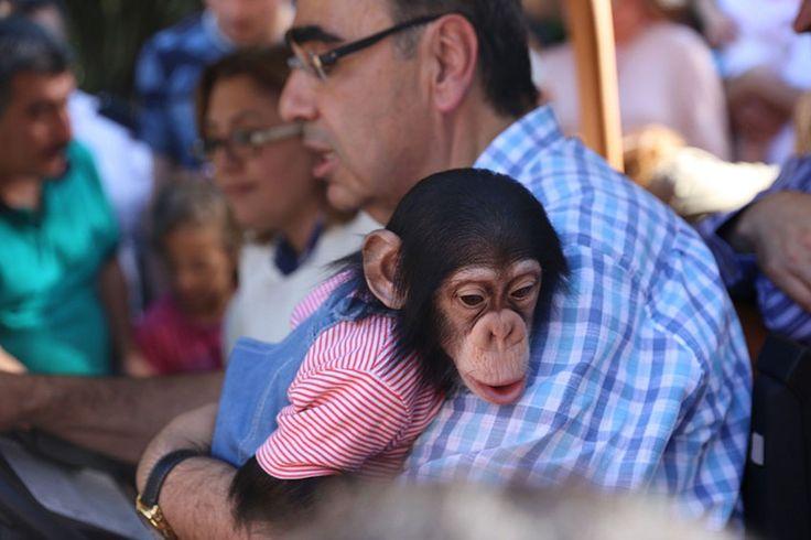 Büyüklüğü ve barındırdığı türler bakımından dünyanın önde gelen hayvanat bahçelerinden biri olan Gaziantep Hayvanat Bahçesi, doğurganlık oranıyla Avrupa'da birinci sırada yer alıyor. Yüzde 75 doğurganlık oranıyla Avrupa'da birinci olan Gaziantep Hayvanat Bahçesini ziyarete gelen yerli ve yabancı turistler bahçenin minik üyelerine yoğun ilgi gösteriyor. Hayvanat bahçesini ziyaret eden Gaziantep Büyükşehir Belediye Başkanı Fatma Şahin, bahçede …