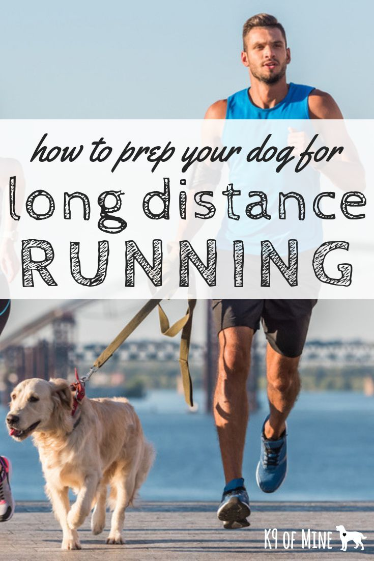 Preparing Your Dog For Long Distance Running What You Need To