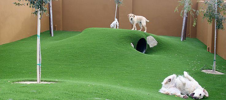 13+ Rolling hills animal hospital images
