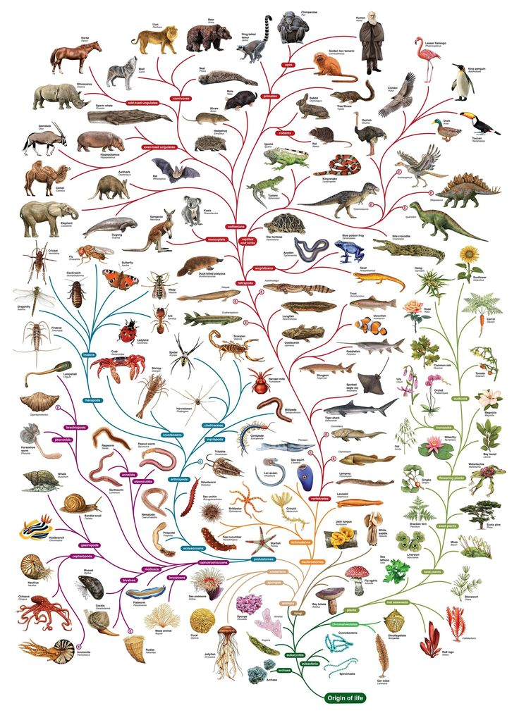 Follow evolution and explore the variety of life on the planet with the Tree of Life.