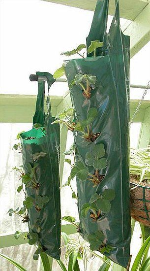 DIY hanging grow bags from heavy duty garbage bags.. Must try!