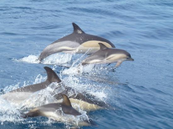 Sealife Lagos