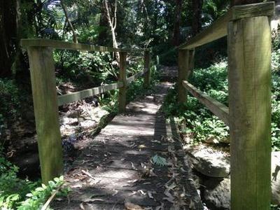 Where is the Best Bushwalk in NSW