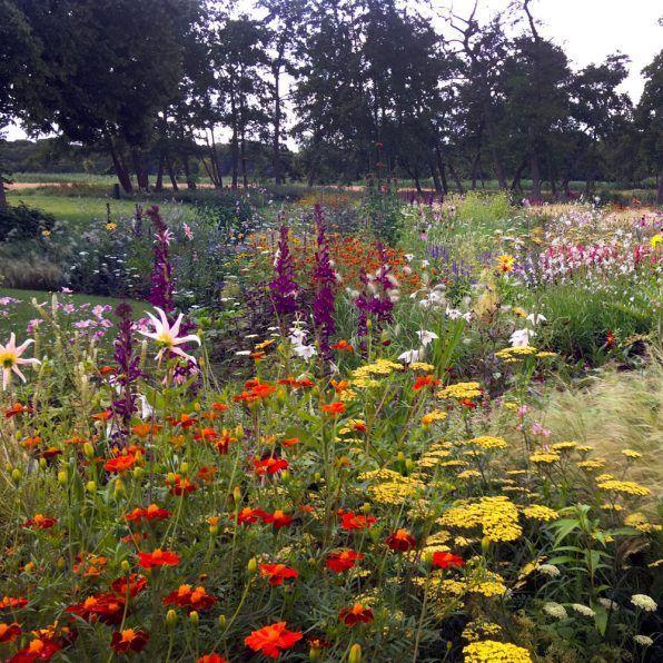 Die besten 25 trockengarten ideen auf pinterest for Piet oudolf pflanzen