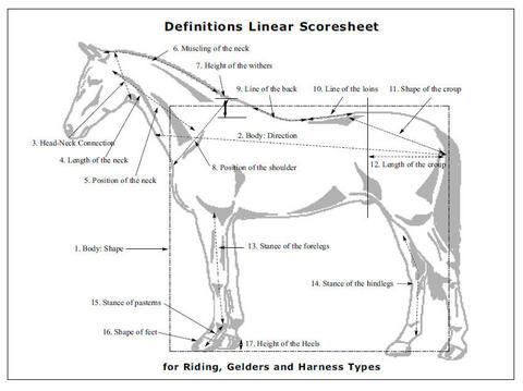 11 best Selecting a Dressage Horse images on Pinterest