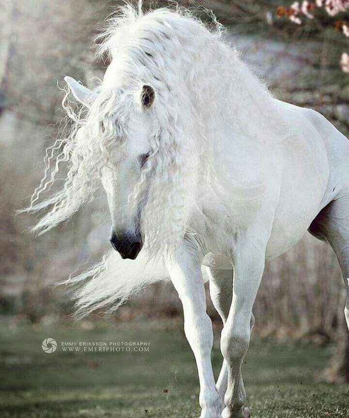 Mejores 59 imágenes de Pegasus en Pinterest   Arte del caballo ...
