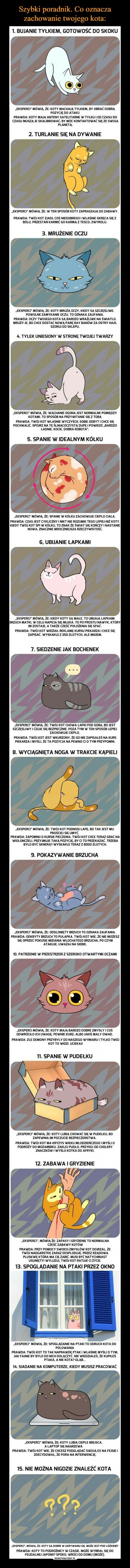15 faktów o kotach