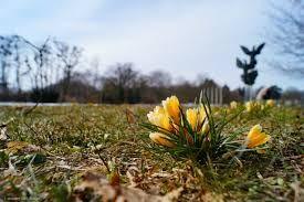 Znalezione obrazy dla zapytania natura wiosna szczecin