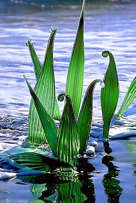/ dale chihuly / glass art / ferns on the beach / oseyrarsandur, iceland / Mehr
