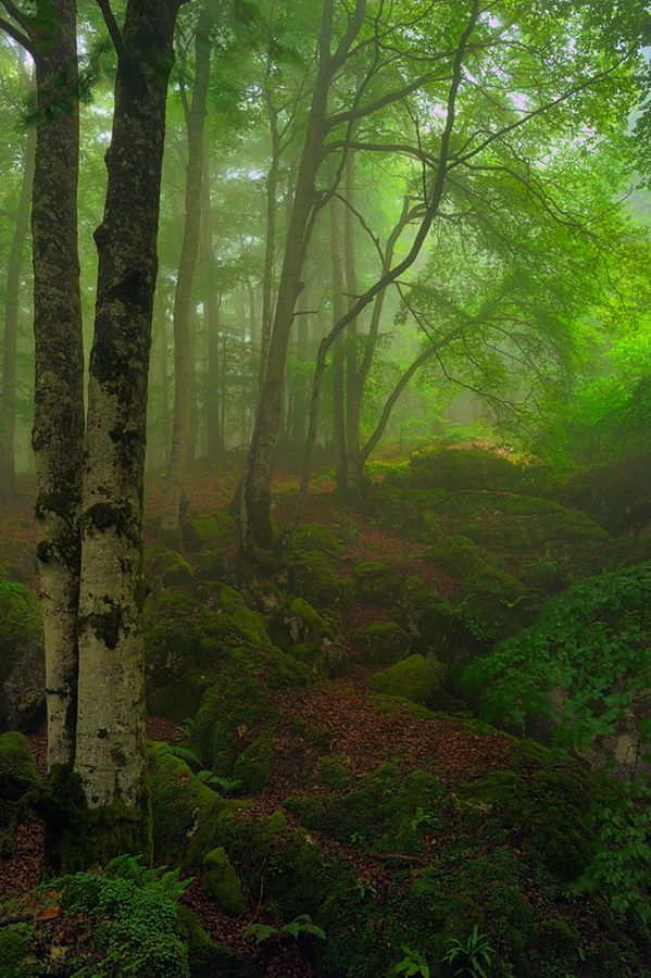 Bosque de Hayas, Navarra, Spain...I would have loved to play here when I was little...imagining elves would take me away to a magical place. : )