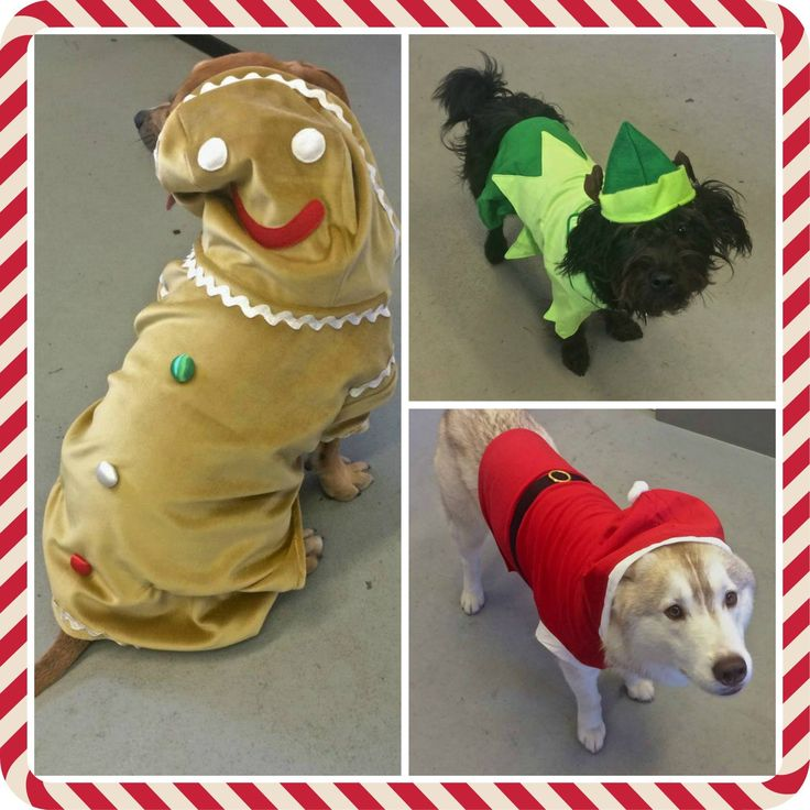 Just three of the gorgeous Dog Bless You Christmas costumes we have in stock this year! Available in a wide range of sizes, they are beautifully made and all priced at $36.95 or under.