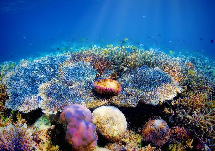 Komodo Øerne i Indonesien har farvestrålende koralrev og et mylder af liv under havoverfladen.