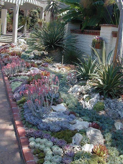 Magnifique parterre de plantes grasses