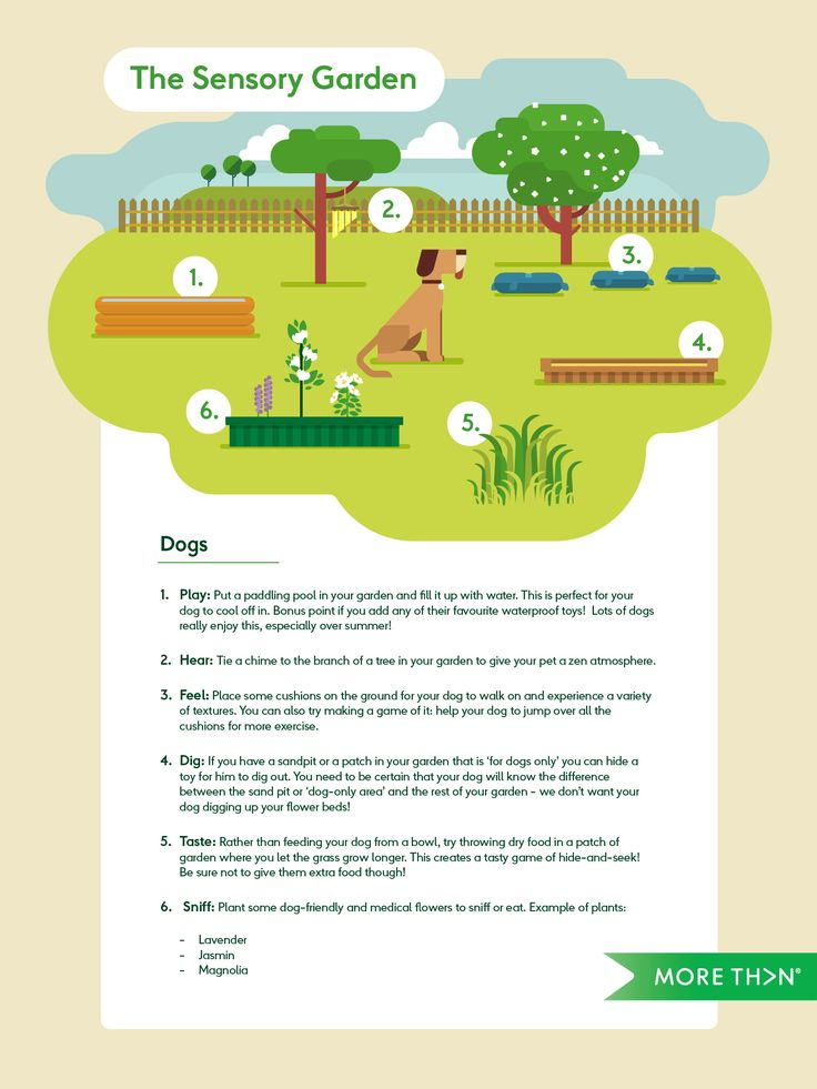 A sensory garden for dogs   MORE TH>N
