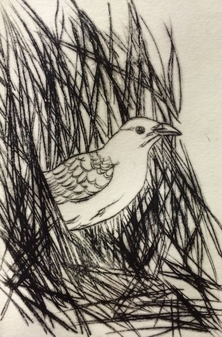 Bower bird Dry point etching Mandy Tootell; Katherine, NT Australia