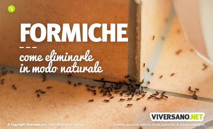 In determinati periodi dell'anno le formiche invadono sistematicamente le nostre abitazioni. Vediamo quali sono i rimedi per eliminare le formiche da casa.