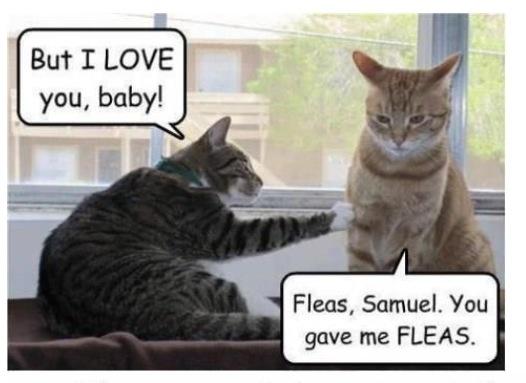 Hahaha cat humor. | Funny cat | Pinterest