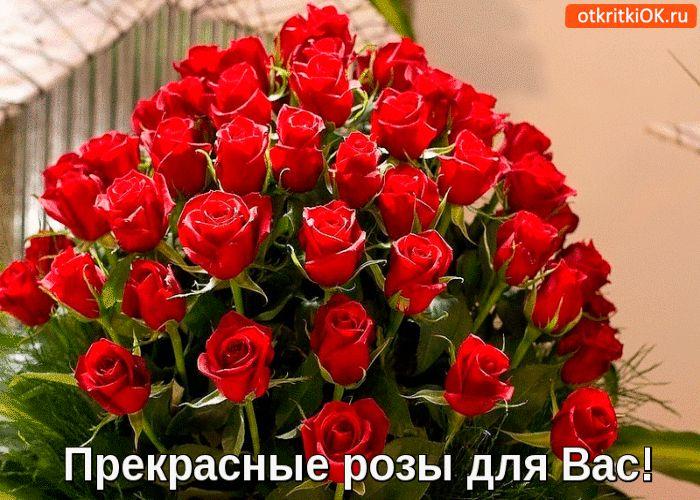 prekrasnie-rozi-dlja-vas