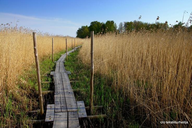 Lammassaari nature path