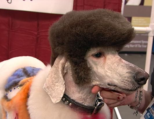 Extreme Dog Grooming Competition. HAHHAHAHAH