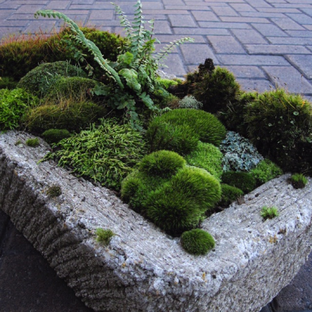 Stone Garden Planters And Troughs 78 best troughs images on pinterest garden ideas yard ideas and pretty moss garden in trough workwithnaturefo
