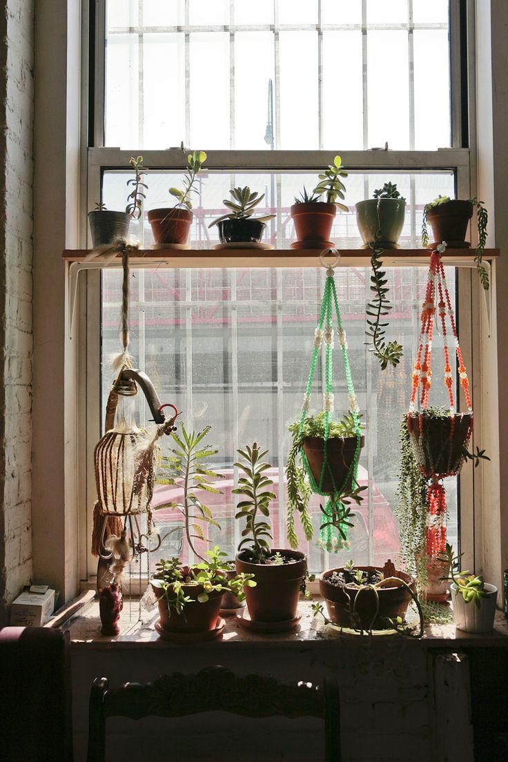 Succulent window garden Best 103 Window Gardens