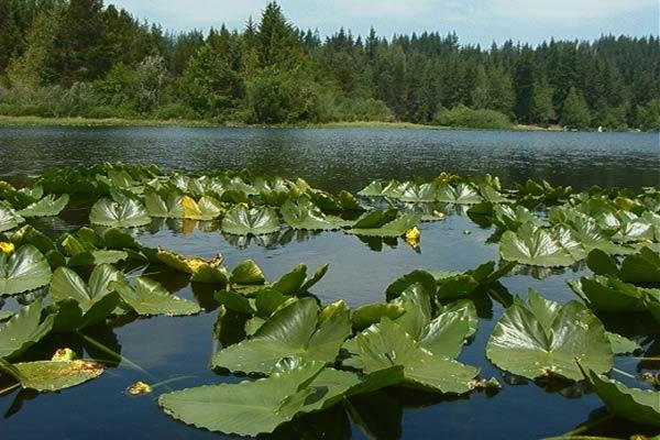 Kemp Lake Sooke BC