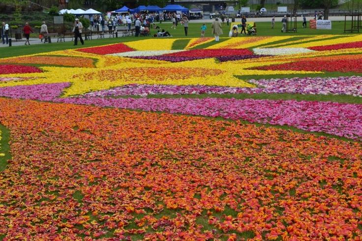 Bydgoszcz, Poland - Flower Carpet