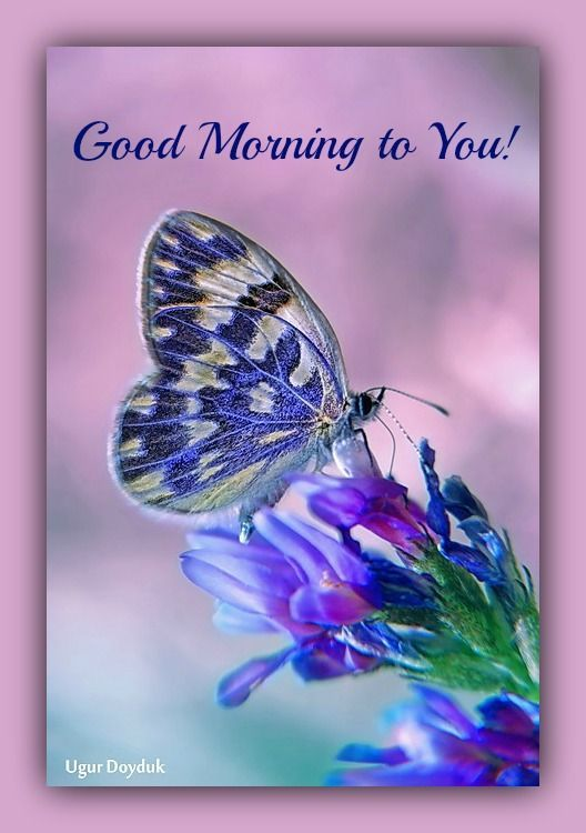 Good Night Quotes Good Morning Goodmorning Butterfly Blue