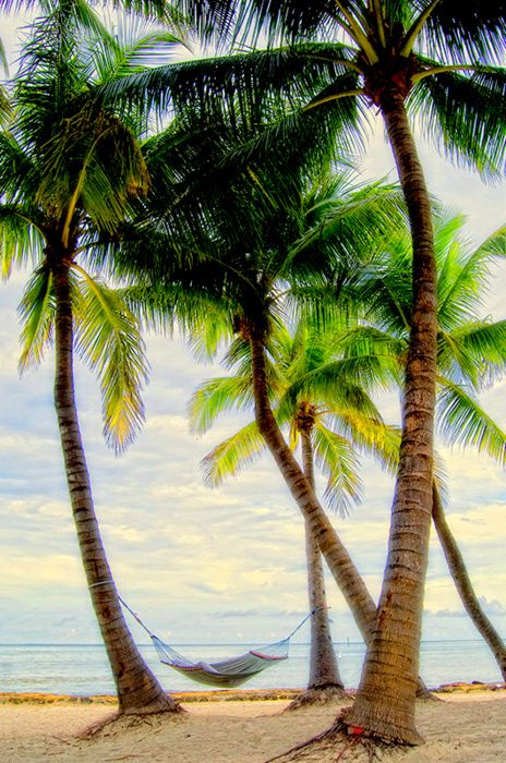 Tropical getaway: Favorite Things, Palms Beaches, Keys West Florida, Hammocks, Palms Trees, Palm Trees, Relaxing Places, Paradise, Good Books
