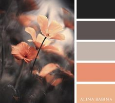 soft melon and grey - color palette