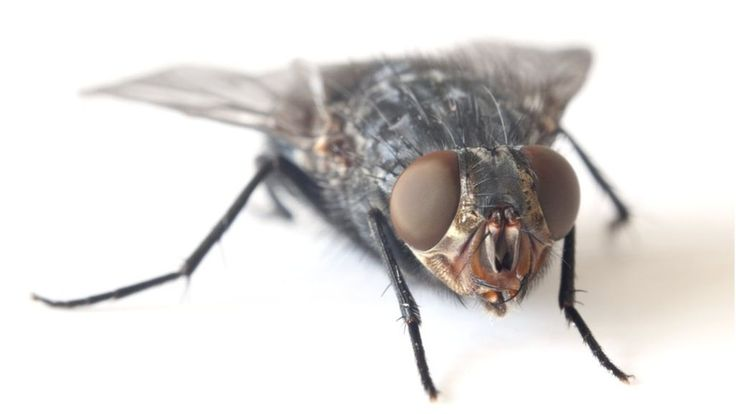 Why is it so hard to swat a fly? - BBC News