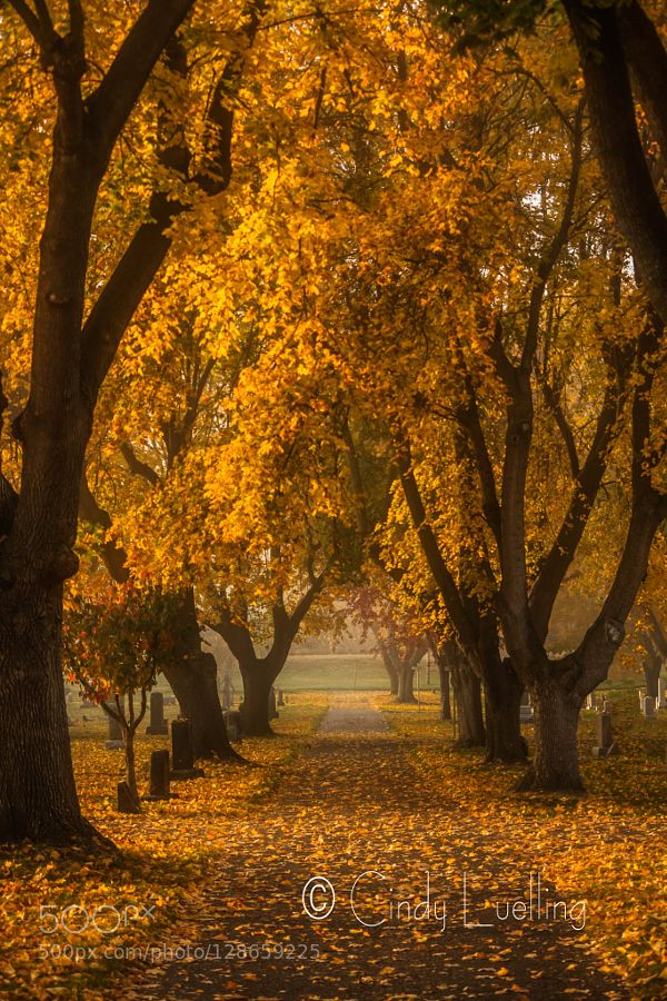 path among the golden leafs by CindyLuelling. Please Like http://fb.me/go4photos and Follow @go4fotos Thank You. :-)