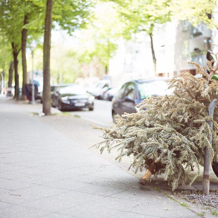 Fancy Oh ein alternativer Maibaum Aber mal ernsthaft Wie ist denn da jetzt das Prozedere